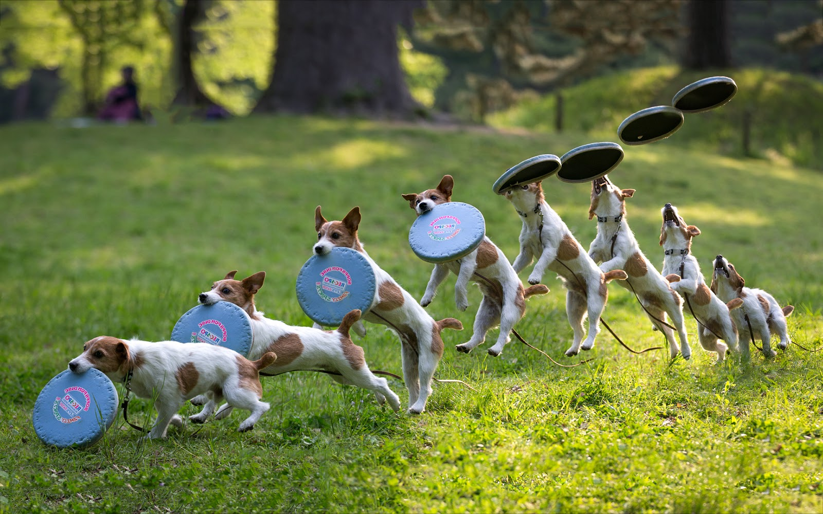 Canine Disc  Growing In Leaps And Bounds