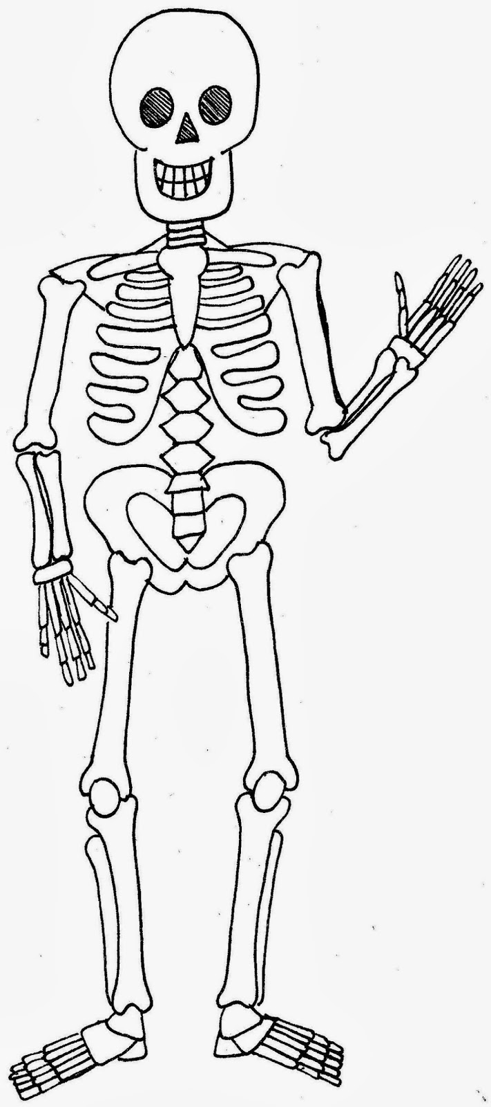 human body skeleton diagram rachael edwards dog skeleton diagram blank dog anatomy skeleton [ 711 x 1600 Pixel ]