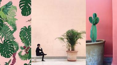 Una de instagram. Plantas sobre fondo rosa con Plants On Pink