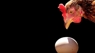 image of a chicken's head and an egg