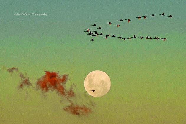 wildlife-photography-4
