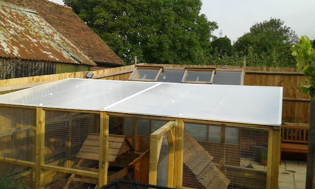 Polycarbonate sheeting covers entire chicken run roof