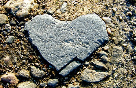 A View From The Sycamore Tree: Hardness of Heart and the
