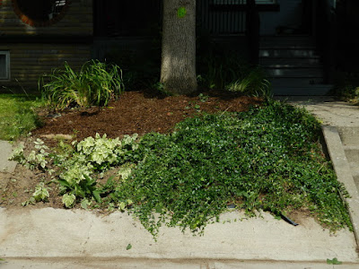 Palmerston Front Garden Clean up after by Paul Jung Gardening Services Toronto