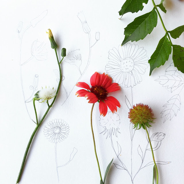 sketchbooks, Jaqui Falkenheim, Sketchbook Conversations, drawing, flowers