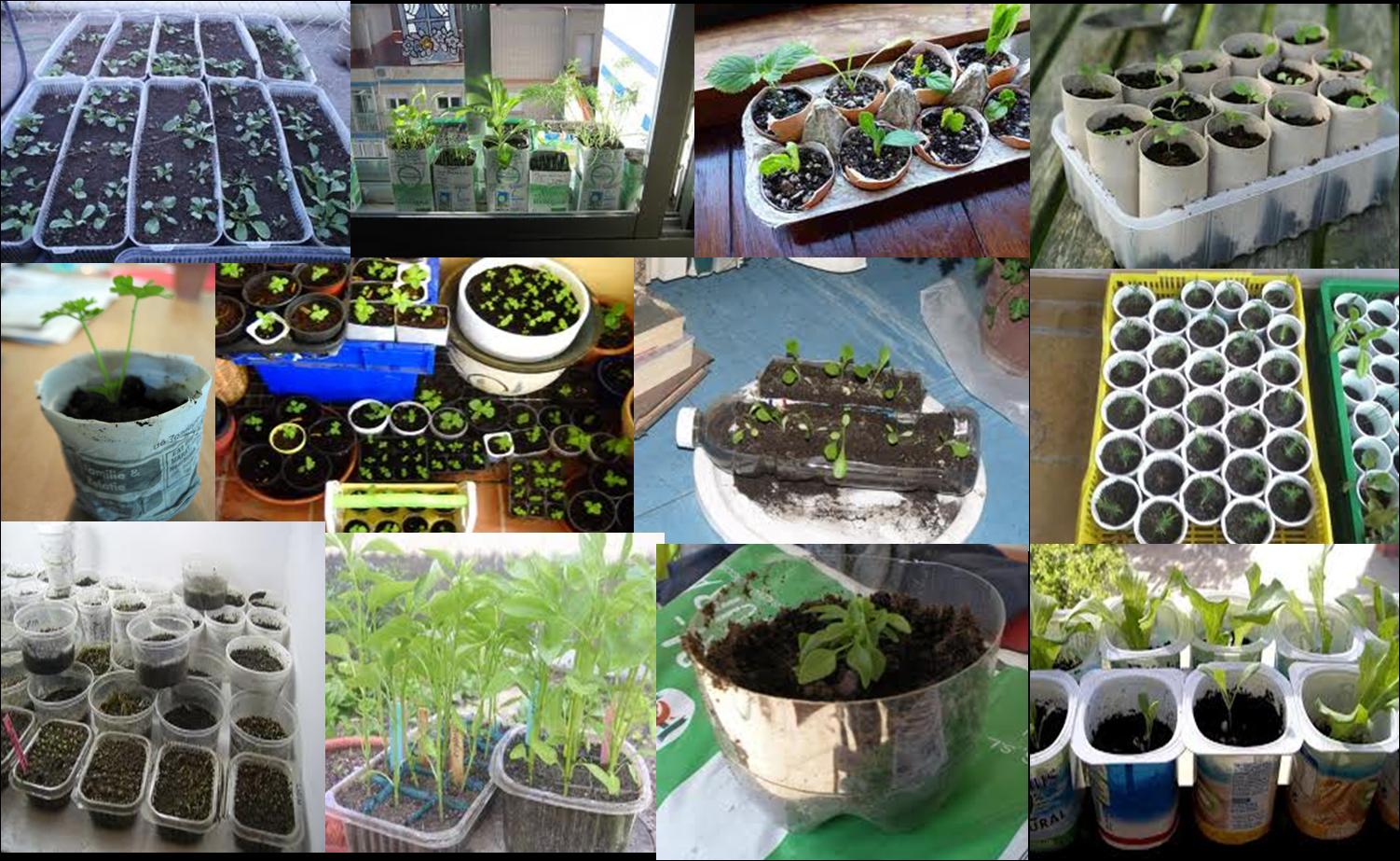 Huerto y maceto huerto ecol gico guia y planificaci n de for Plantas beneficiosas para el huerto