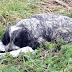 Este perro abandonado se niega a soltar la bolsa — Cuando un hombre la abre descubre lo impensable.