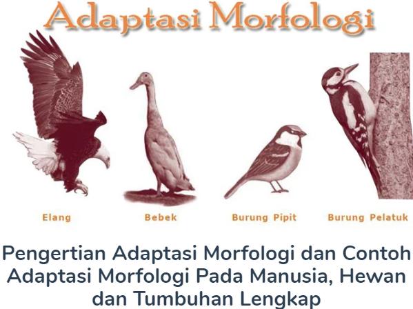 Membahas Materi Pengertian Adaptasi Morfologi Beserta Contoh Adaptasi Morfologi Pada Manusia, Hewan dan Tumbuhan Lengkap