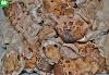 Η διατήρηση των άγριων μανιταριών στην κατάψυξη