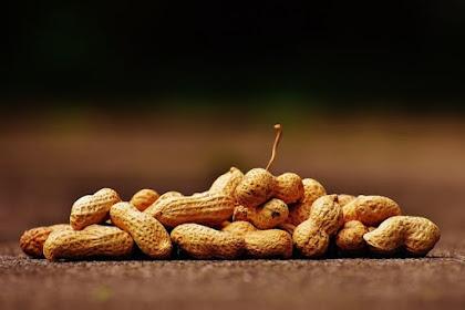 Kacang Tanah, Si Baik Yang Sering Dijahatin