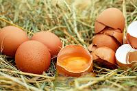 jaunes d'œufs de poules élevées en plein air
