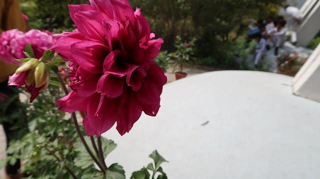 beautiful-flowers-wallpaper-free-download