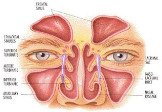 anatmoi sinus 1