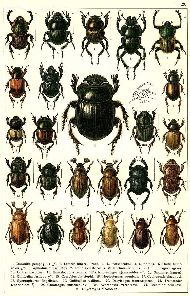 Besouros