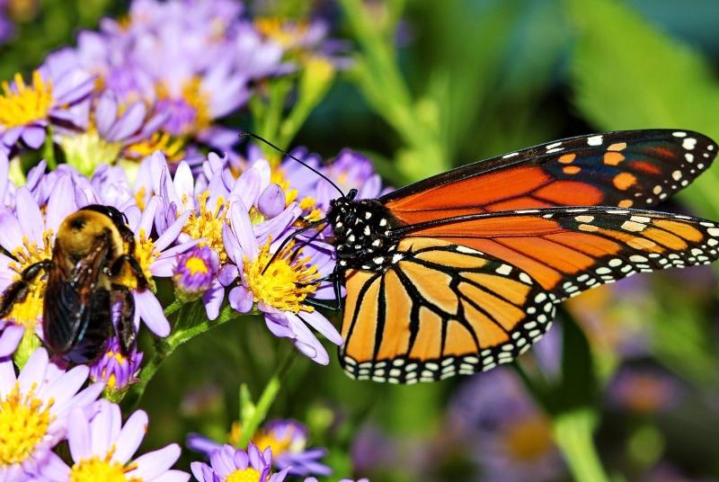 Abelha e borboleta