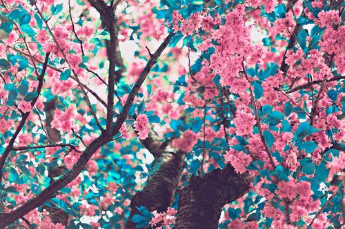 Wallpapers De Kpop Para Compu: Pequeno Pensar: Tumblr: Flores