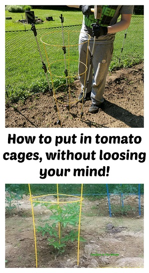 how to stake tomatoes