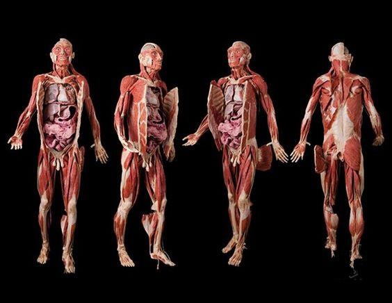 तंत्रिका तंत्र the nervous system