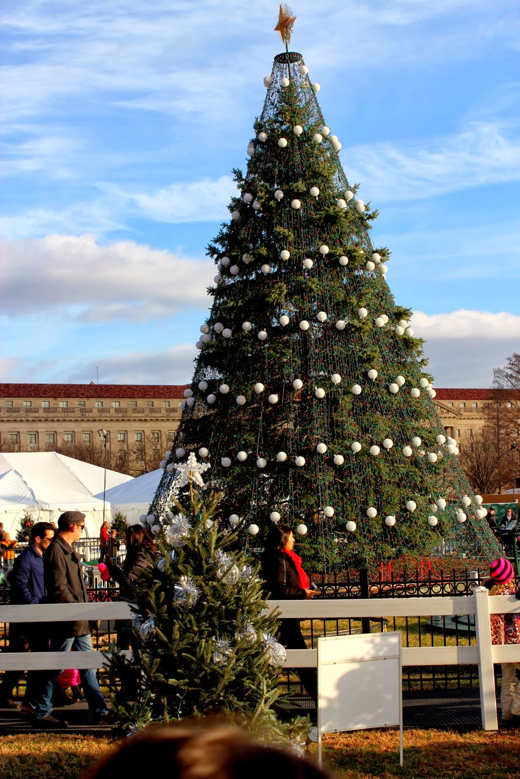 Delancey Street Christmas Trees.Here And There The National Christmas Tree