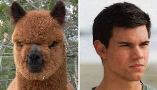 los dobles de los famosos - humor - Taylor Lautner