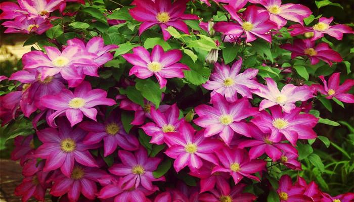 Plantas para cerco bellas