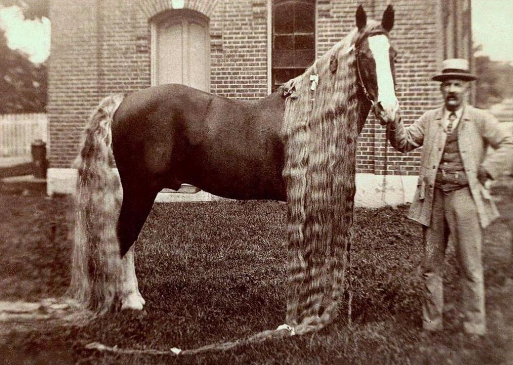 Long hair is not just for humans incredible vintage pictures of the long hai - Ancienne vitrine de magasin ...