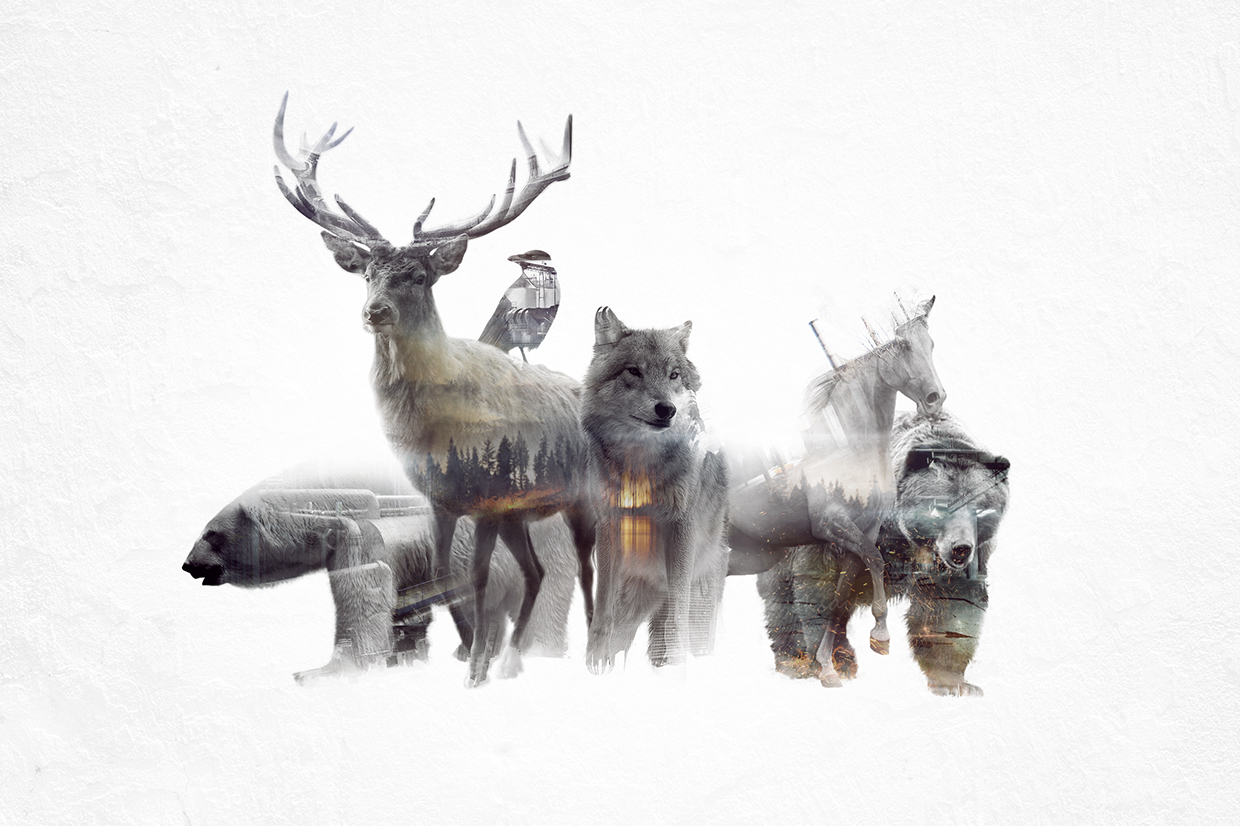 13-Group-Photo-Said-Dagdeviren-Double-Exposure-Animal-Cinemagraph-Animations-www-designstack-co
