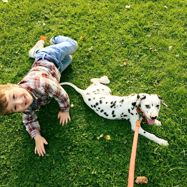 Dalmatian puppy and child