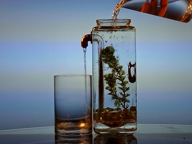 Coolest Fish Bowls and Awesome Aquarium Designs (15) 1