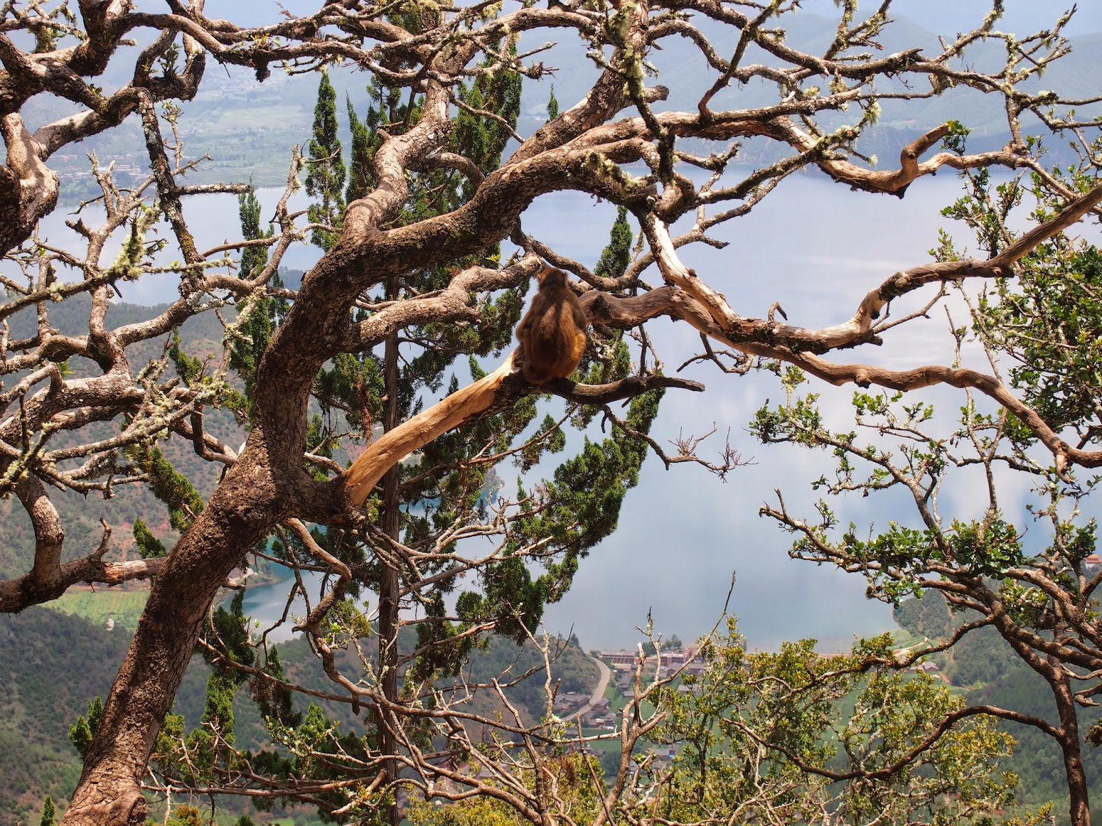 A monkey with the best view of lugu lake