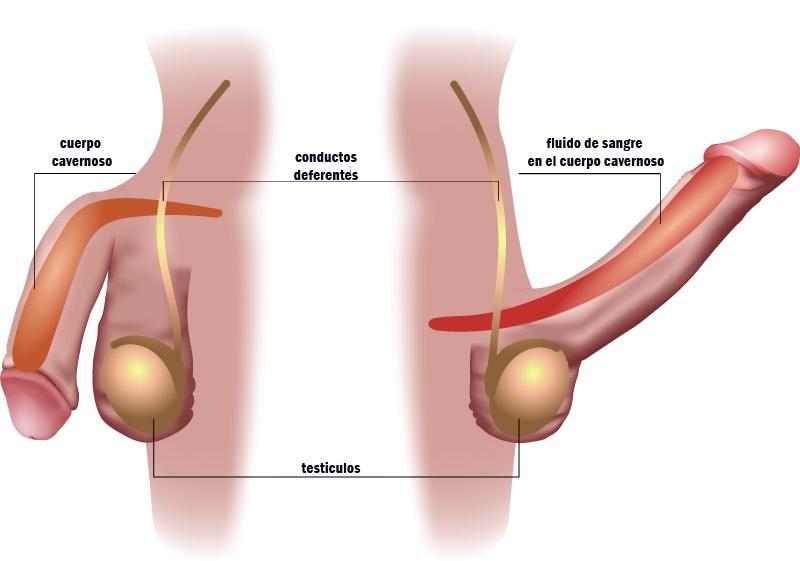 donacion de pene