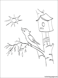 Cute Starling Nias Coloring Pages For Print Online