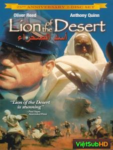 Sư Tử Già Trên Sa Mạc