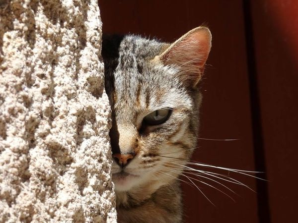 cat half hidden