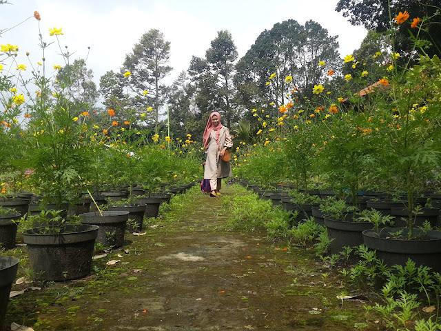 Kebun Bunga Bhakti Alam Pasuruan
