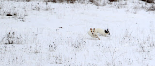 Chasing through the snow
