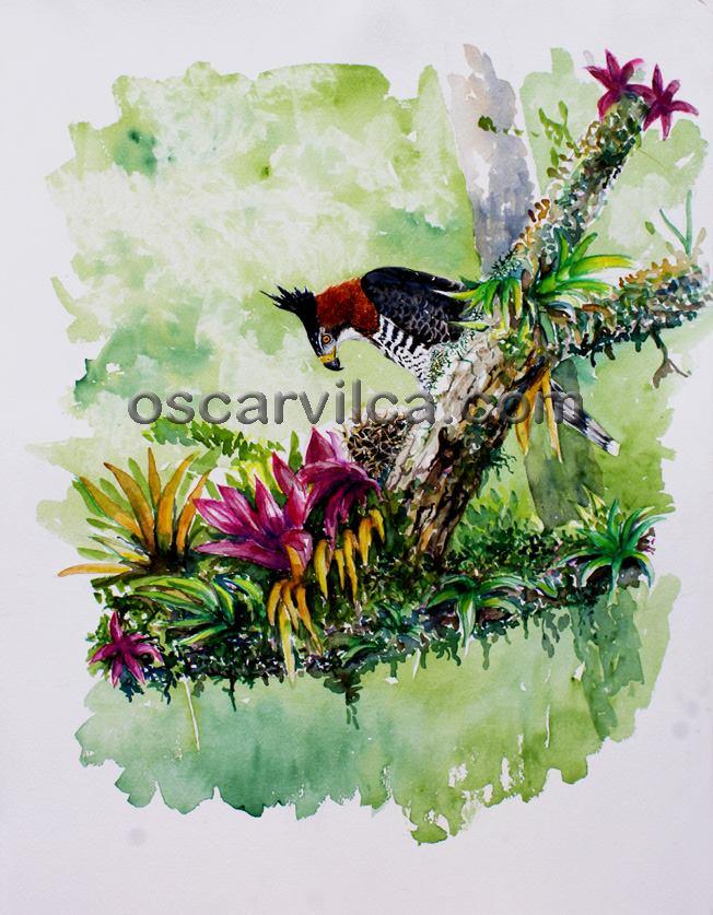 Las aves en la ilustración naturalista en el Perú   Aves, Ecología y ...