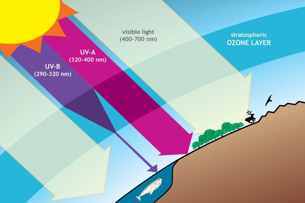 UV-A and UV-B radiation
