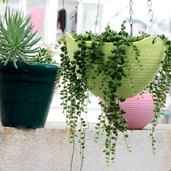 Chậu nhựa treo trồng hoa ban công