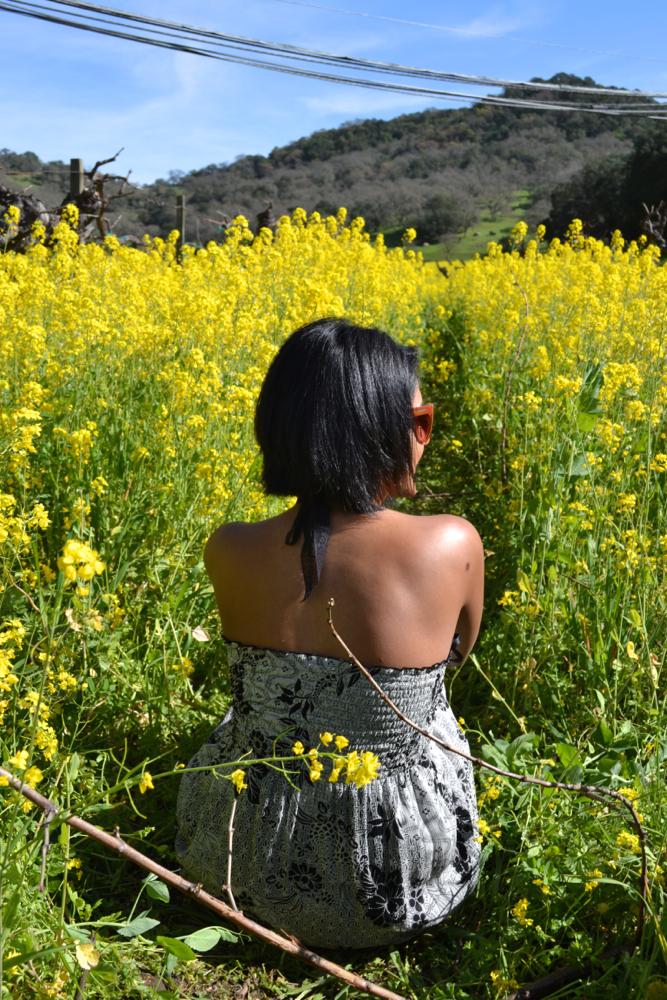 mustard flowers in napa valley