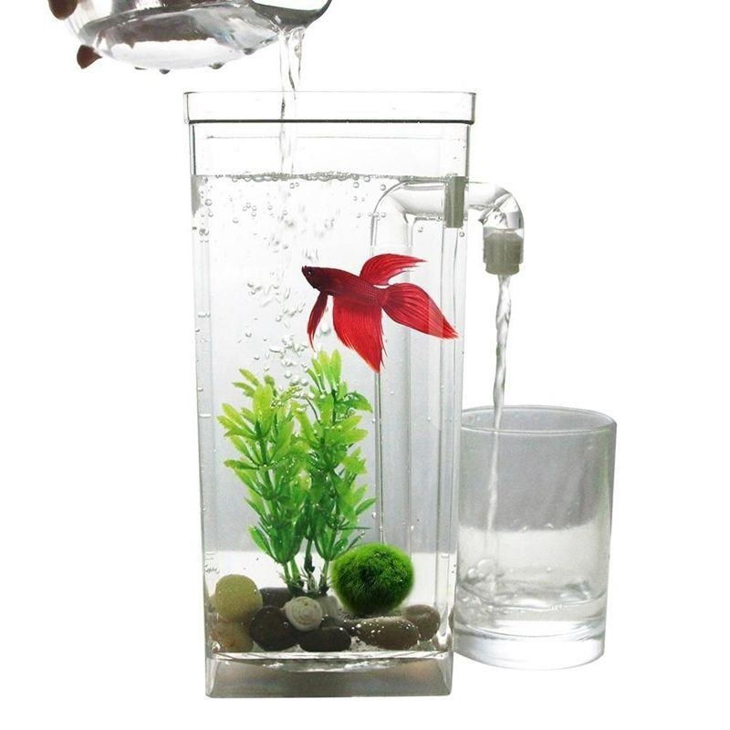 Image The Truth About Cool Betta Fish Tanks
