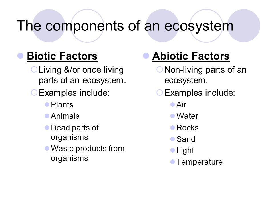 components of the ecosystem Title: microsoft word - structural and functional components of ecosystemdoc author: net created date: 7/23/2005 18:11:57.