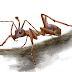 Descoberta formiga-unicórnio de 99 milhões de anos