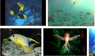 Ikan Crepuscula