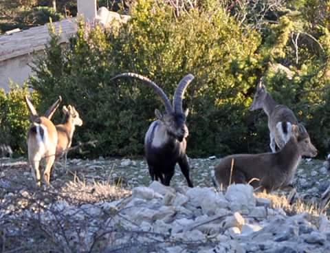 Variado fotos beceite beseit toll rabosa cabras estrechos pesquera 2