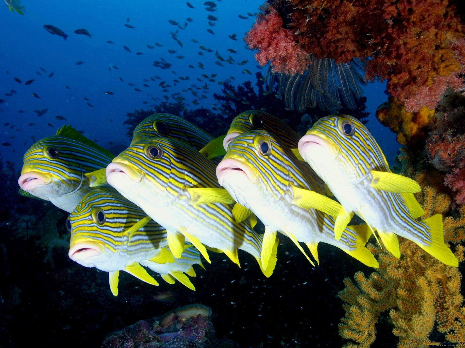 sea animals hd wallpapers adssss