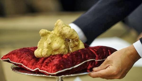 فطر الكمأة البيضاء White Truffle أغلي أنواع الفطر في العالم !