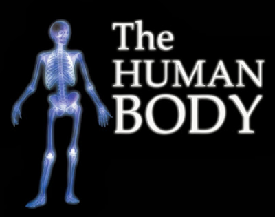 http://englishmilagrosa.blogspot.com.es/2013/09/my-body-and-my-senses-human-body.html