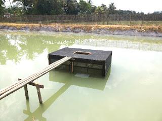 kolam budidaya sidat