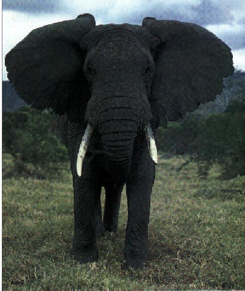 Black And White Wallpaper Designs Elephant Picture Galleries Best Blog Wallpaperlikjen Create